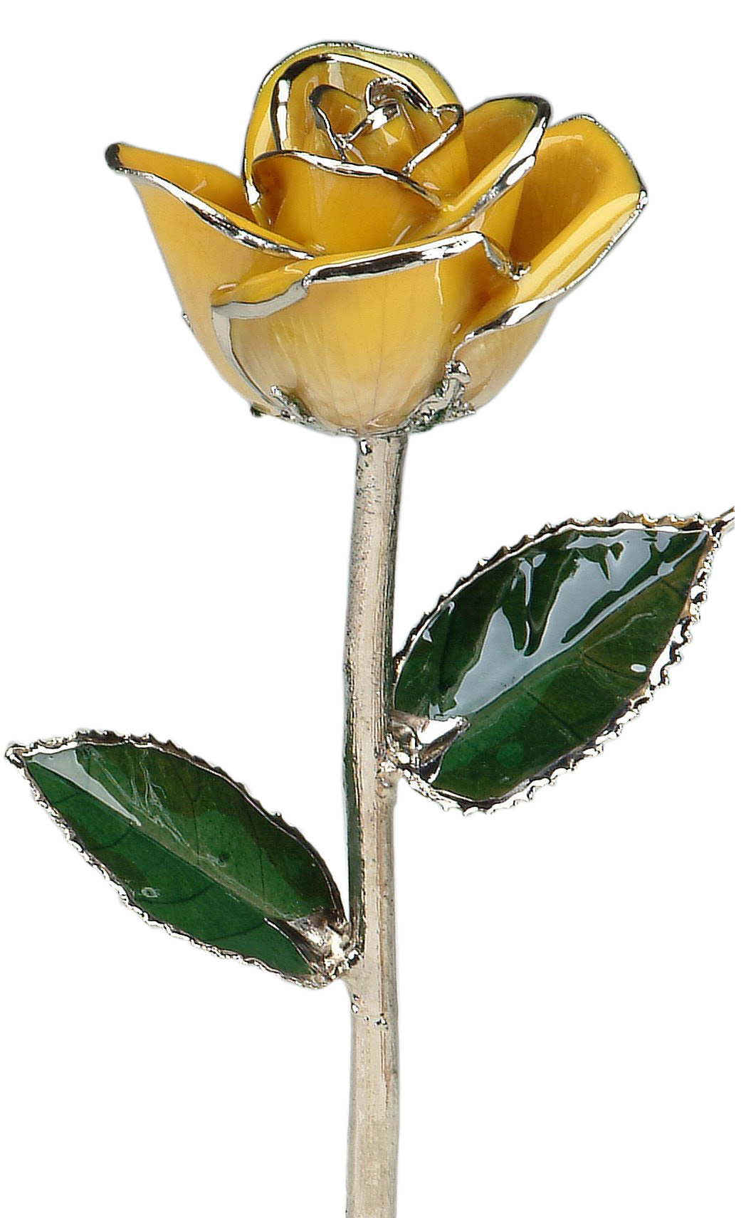 yellow-platinum-trimmed-rose.jpg