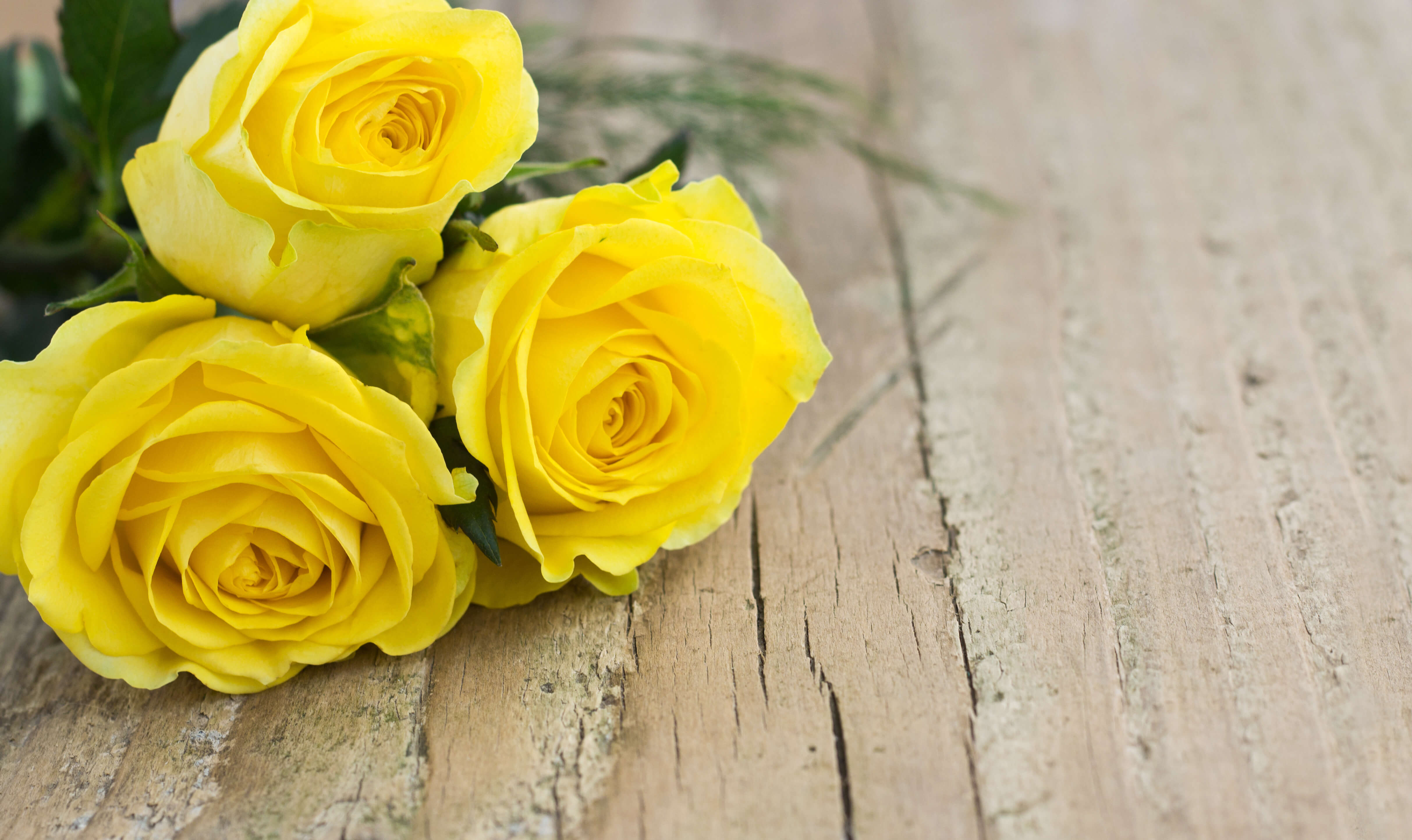 Ultimate yellow rose meaning symbolism guide goldflorist ultimate yellow rose meaning guide mightylinksfo